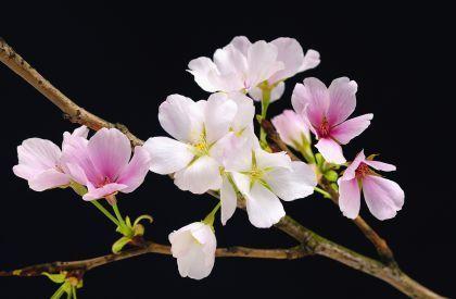 Kwiaty Fototapeta Sklep Eplakatypl