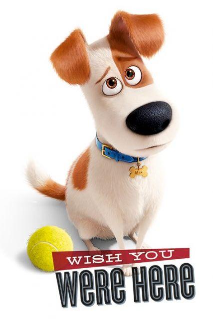 Plakat z Maxem z bajki Sekretne życie zwierzaków domowych