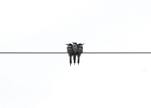 Black Swallow - plakat