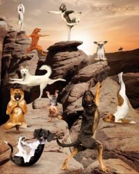 Yoga Dogs Canyon - plakat