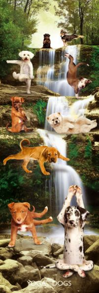 Yoga Dogs - plakat
