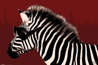 It's a WildLife - Zebra - plakat