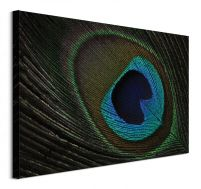 Peacock Feather Eye - obraz na płótnie